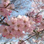 春ということで Part2