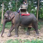 27歳の誕生日。僕の妻は象使いになった。〜第二話〜